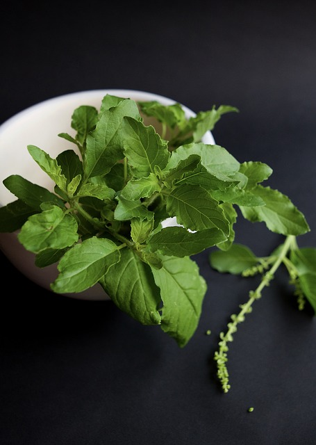 Holy Basil is useful in overcoming fatigue and stress since it improves physical fitness endurance, concentration and memory.